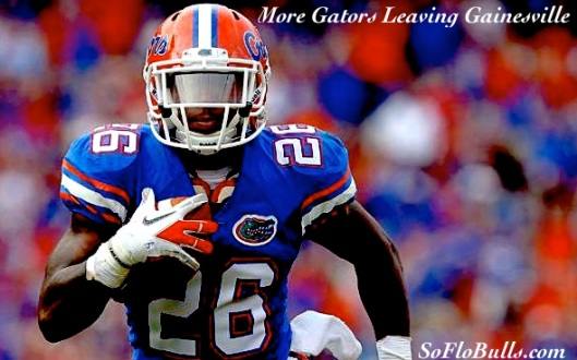 More Gators Leaving Gainesville  by Matthew Manuri  SoFloBulls.com 