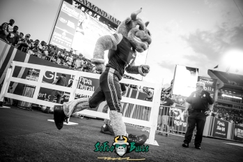 26 - Illinois vs. USF 2017 - USF Rocky the Bull B&W by Dennis Akers | SoFloBulls.com (6016x4016)